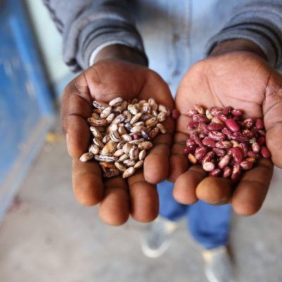Adapting the Crop Trust's Strategy to Global Change